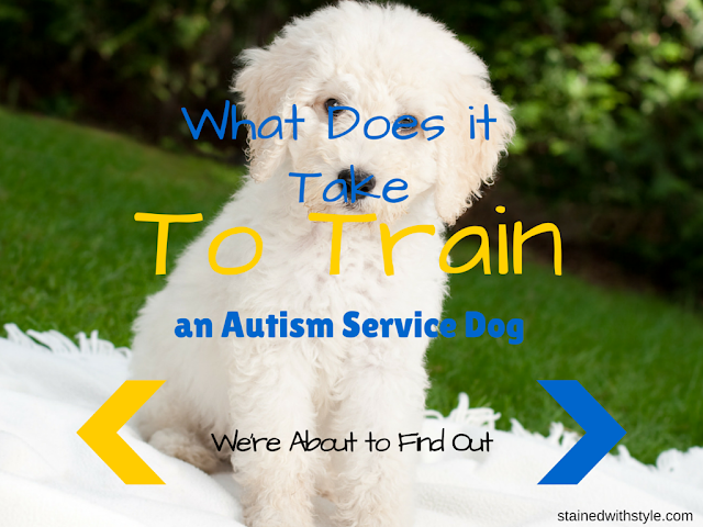 service dog, autism service dog, service dog in training, labradoodle, autism and dogs