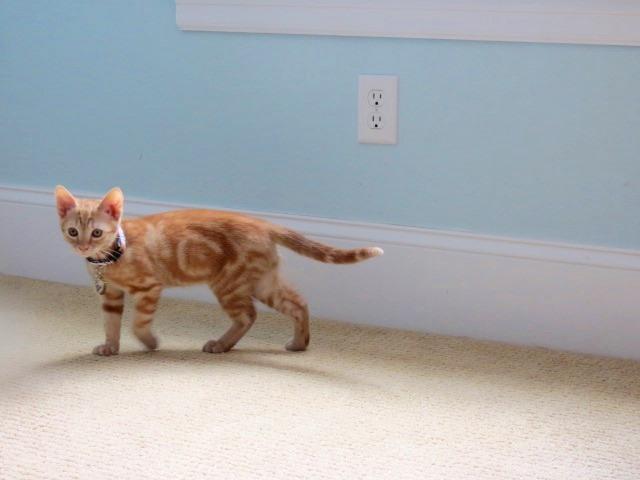 Cat Collar Prevent Scratching