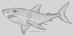 shark pencil cool drawing sketches drawings easy sketch awesome draw impressive word drawingartpedia paintingvalley