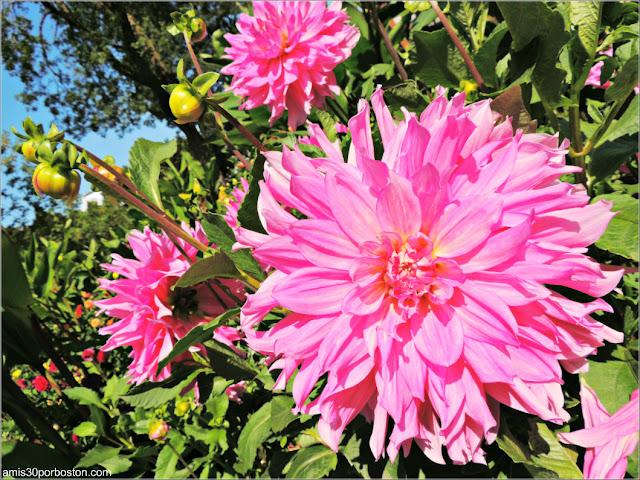 Flores en el Perennial Garden del Jardín Botánico de Montreal
