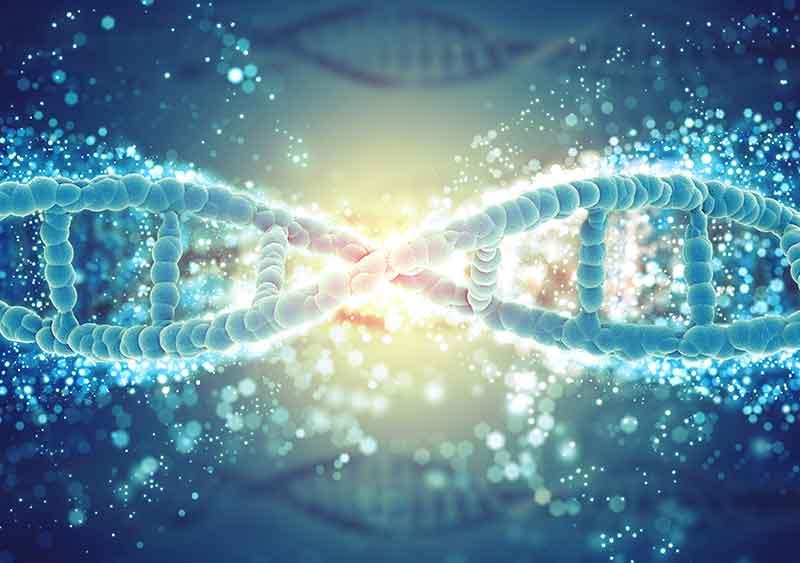 Les-bases-de-la-génétique-du-Guppy