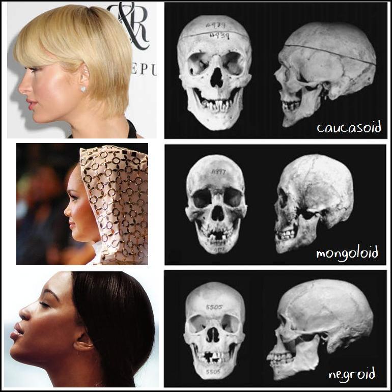 anthropometric facial analysis ethnic comparison jpg 1152x768