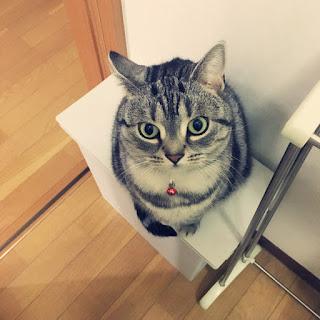 掃除を観察する猫