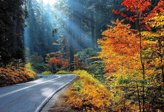Road to Glory Sequoia National Park by Lynn Bauer