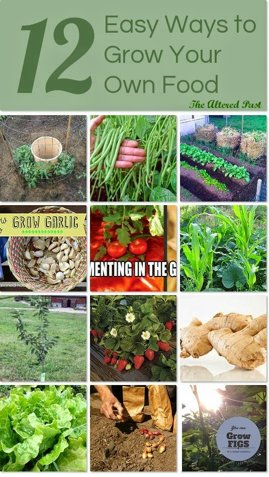 12 Easy to Grow Foods on Hometalk