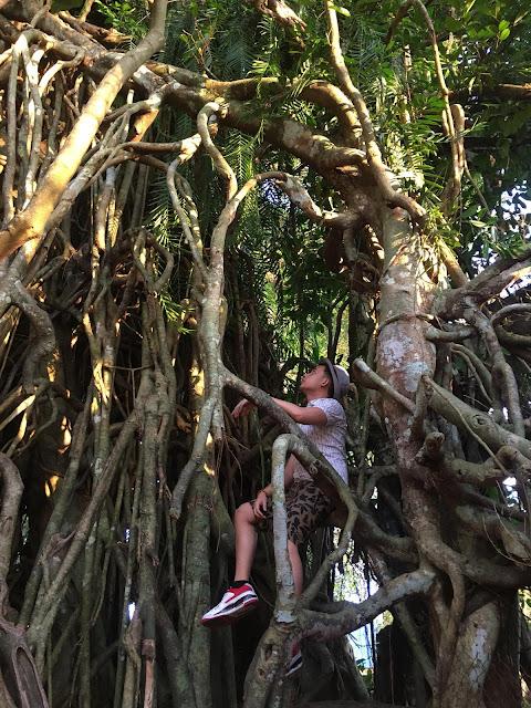 Aurora's Bewitching Balete Tree