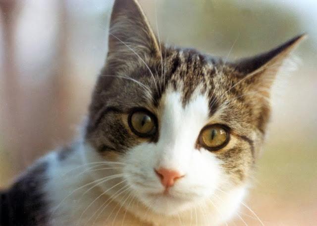 لما تدفن القطط برازها بالتراب؟؟ 683ed37174cd76dcf51b