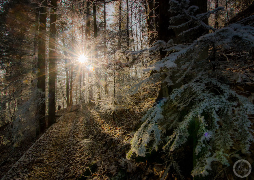 Μαγικές χειμωνιάτικες φωτογραφίες από το Εθνικό Πάρκο Pieniny της Πολωνίας_omorfos-kosmos.gr