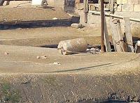 Bir toprak dam üzerinde çatıyı sıkıştırmakta kullanılan loğ veya taş silindir