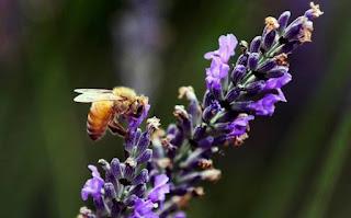 abejas yucatan - Por cambio climático y deforestación, colapsan abejas en Yucatán - El Apicultor Español: Actitud y Aptitud Apícola
