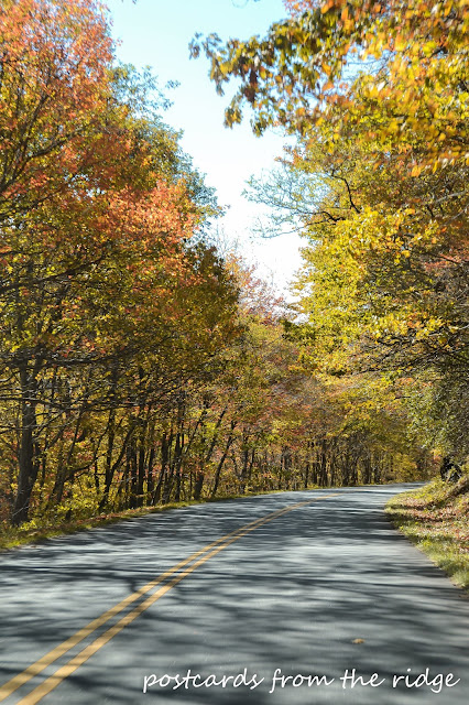 Scenic fall drive on the Blue Ridge Parkway, North Carolina