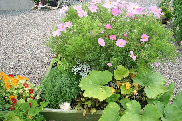 Vegetable & Herbs & Flower garden
