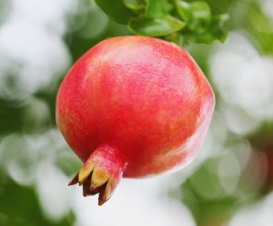 buah delima, manfaat buah delima