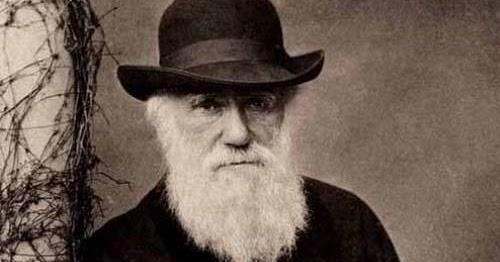 Darwin forex