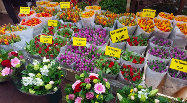 Tulips at the Bloemenmarkt in Amsterdam