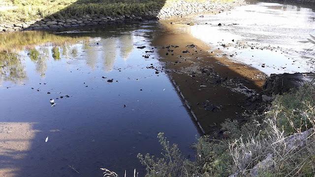 Peces muertos en la zona de la depuradora de Galindo