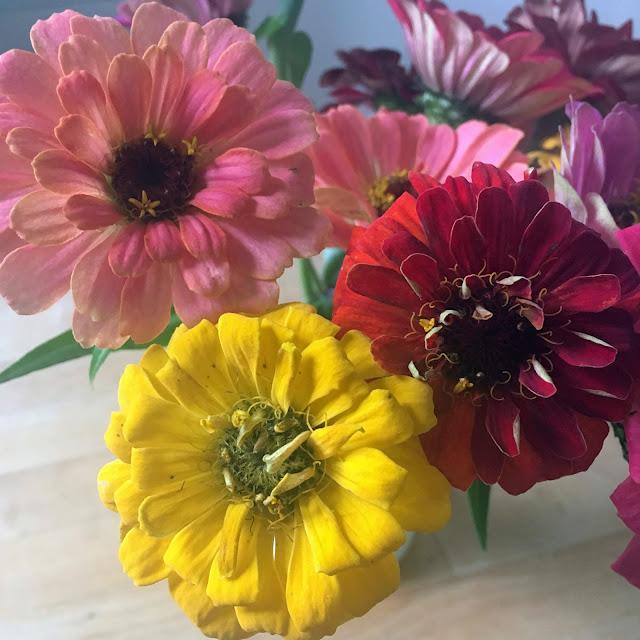 zinnias, garden, flower gardening, garden flowers, Anne Butera, My Giant Strawberry