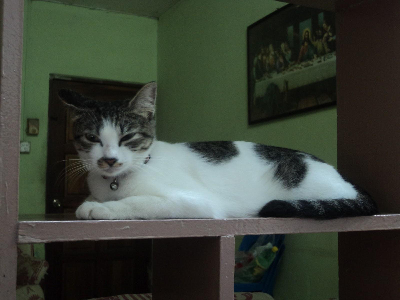 Lovesiee Blogspot Com Everyone Can Bah Cat Lovers