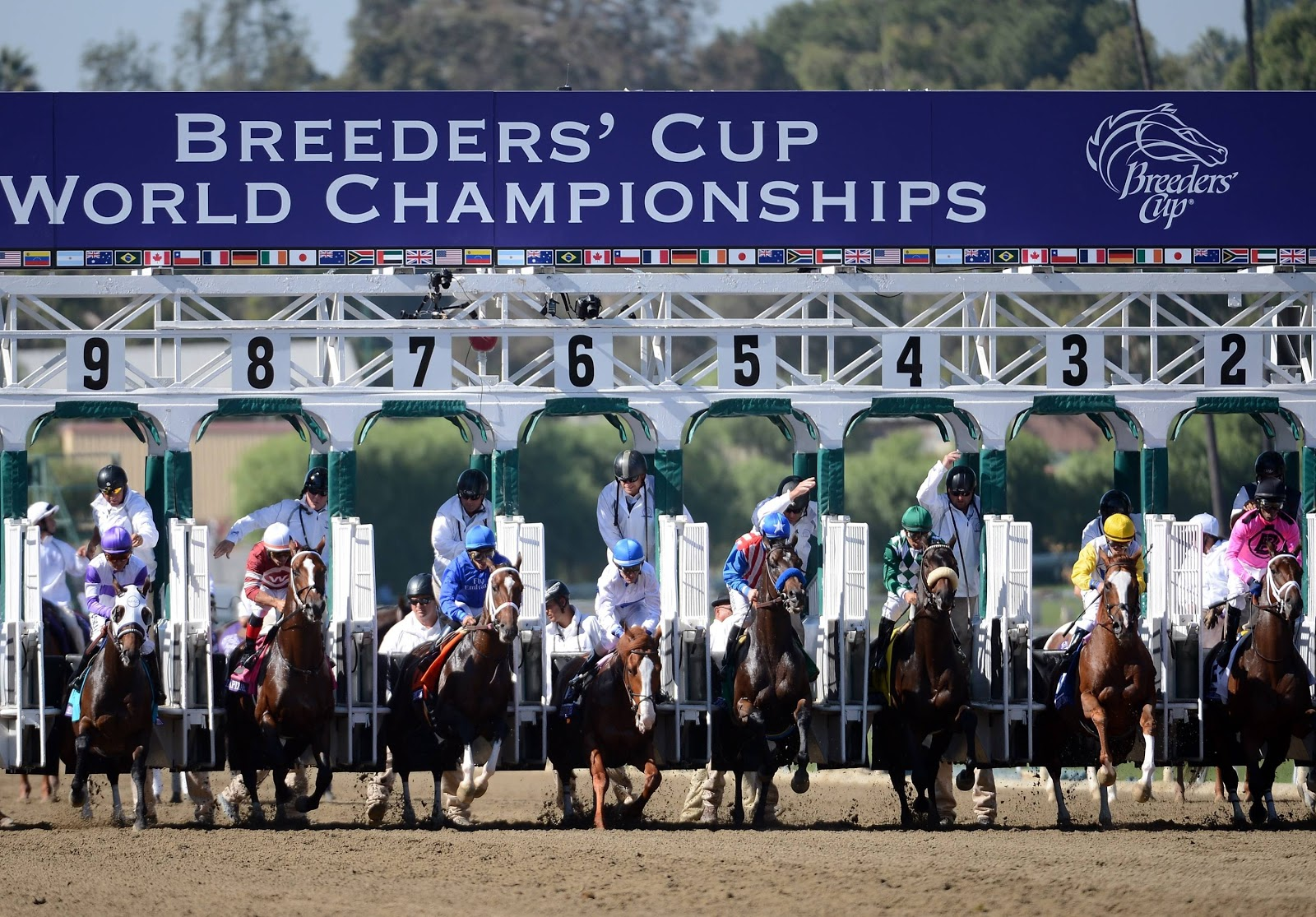 Pictures Of The Day Breeders Cup Virginia Thoroughbred