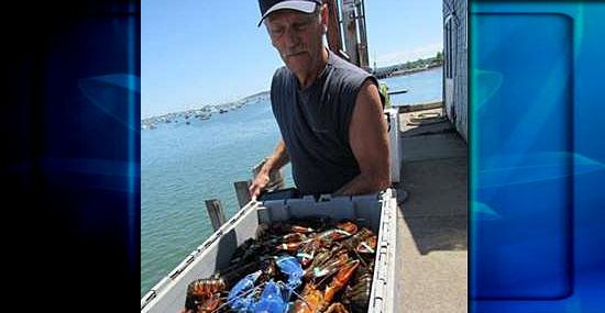 Raríssima lagosta azul é encontrada por pescador