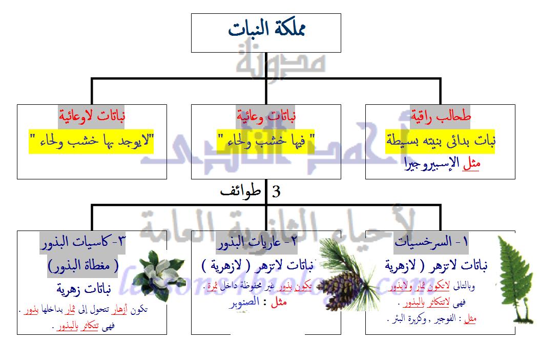 تصنيف مملكة النبات - الفوجير - تعاقب الأجيال