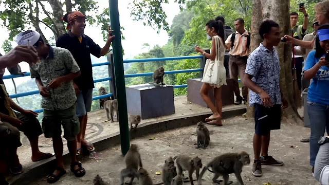 Melihat Keusilan Monyet Di Wisata Alam Hutan Monyet Pusuk