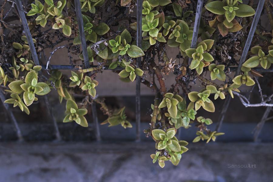 Vegetación entre rejas