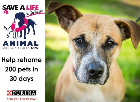 Animal-Welfare-League-NSW-Save-a-Life