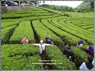 Ciwidey , Bandung Indonesia