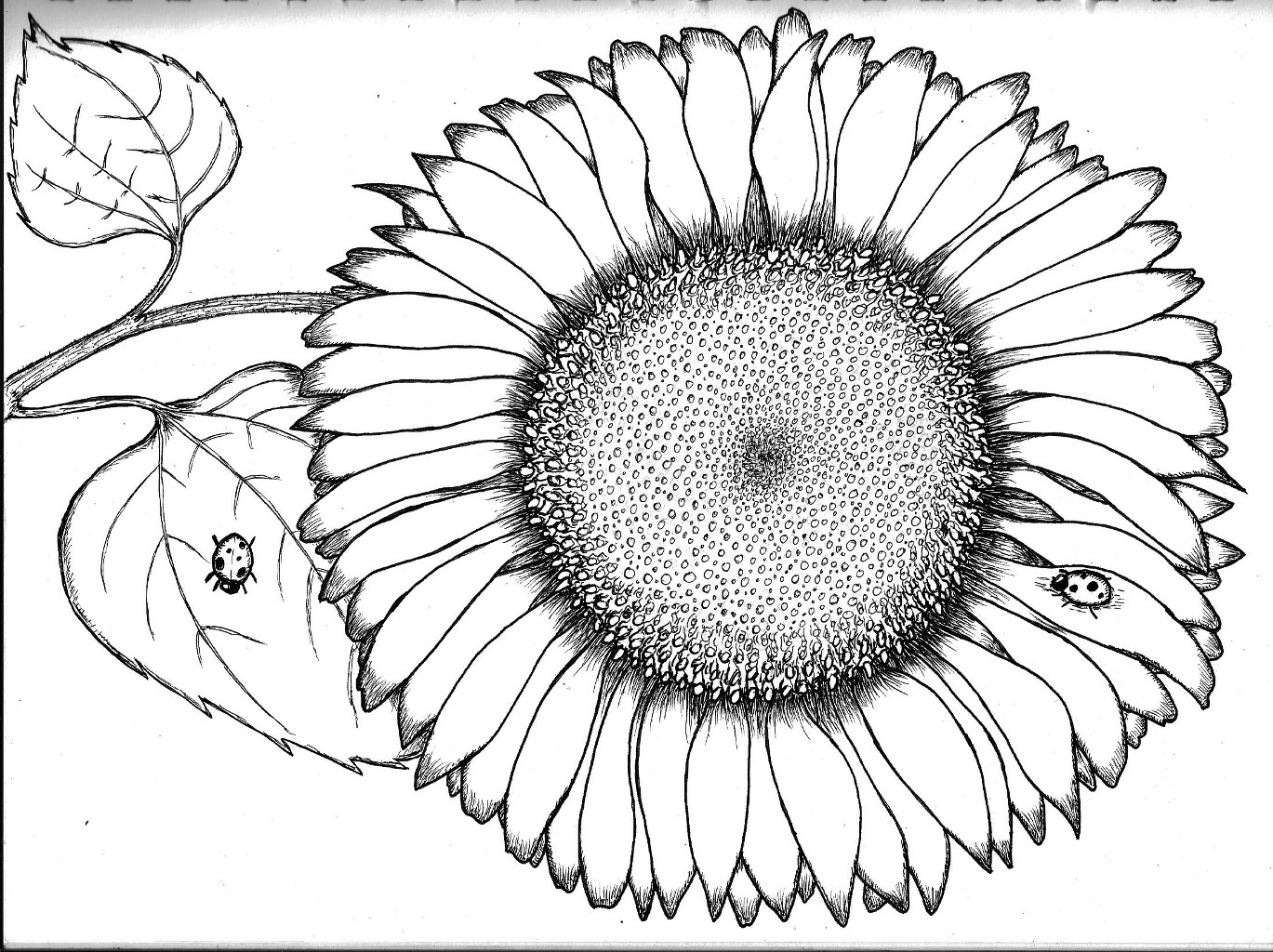 Unique Sunflowers Coloring Pages Images Free Coloring