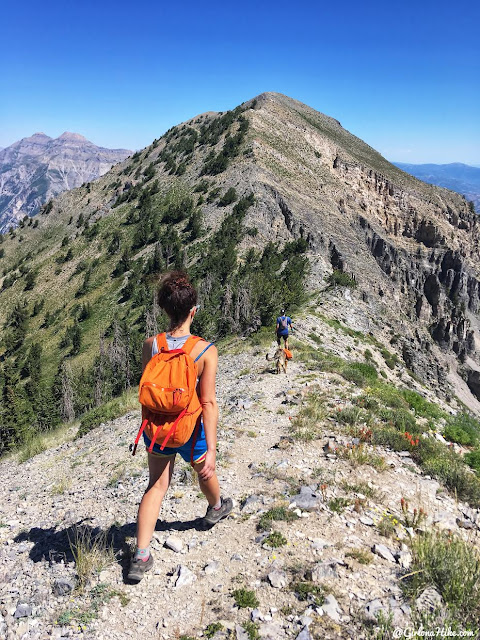Hiking to Cascade Peak, Utah, Hiking the Wasatch 7 Peaks, Utah Peak Baggers, Wasatch Peak Baggers