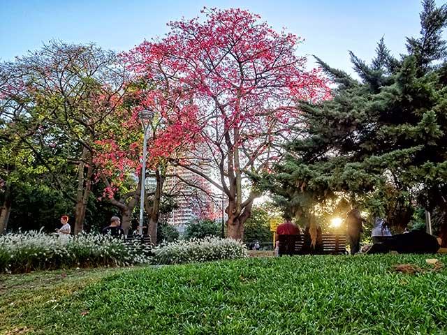 Atardece en el parque entre los arboles.