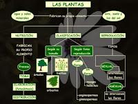 http://catedu.es/chuegos/kono/quinto/t2/es_plantas.swf