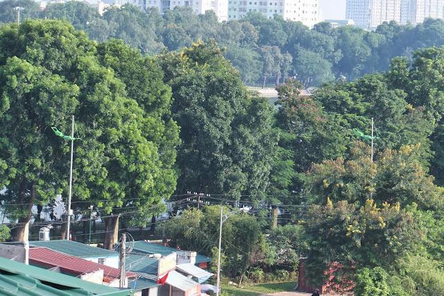 hanoi-forest ハノイの木々
