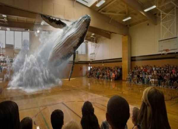 Ikan paus tiba-tiba muncul dan melompat dari lantai gimnasium sekolah