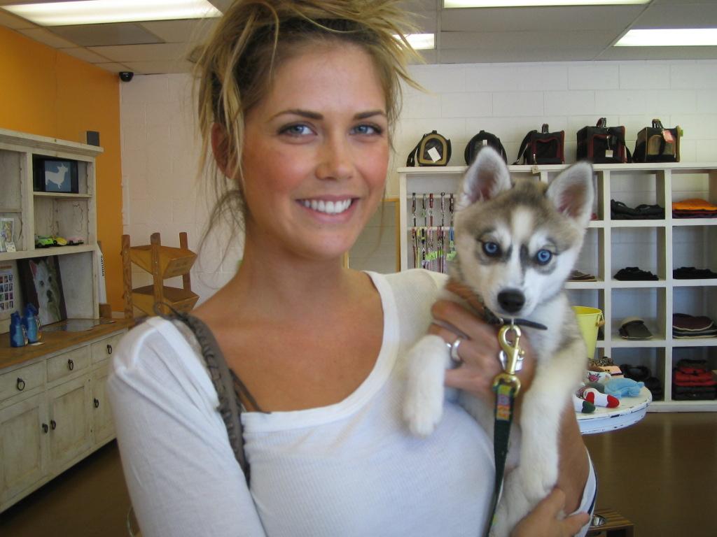 PuppyFind  Alaskan Klee Kai Puppies for Sale