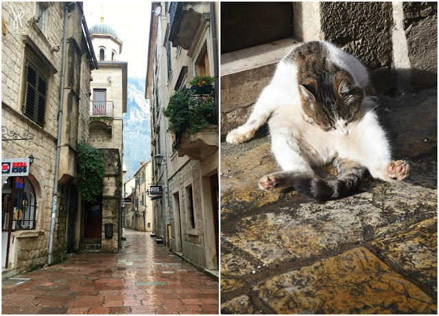 an alley and cute chubby cat in Kotor