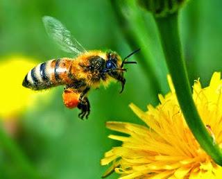 Arti mimpi dikerumuni lebah bisa juga arti mimpi dikerubungi lebah, arti mimpi membunuh lebah ataupun arti mimpi diserang lebah, arti mimpi melihat lebah, arti mimpi dikejar lebah, arti mimpi digigit lebah, arti mimpi disengat lebah, arti mimpi lebah madu