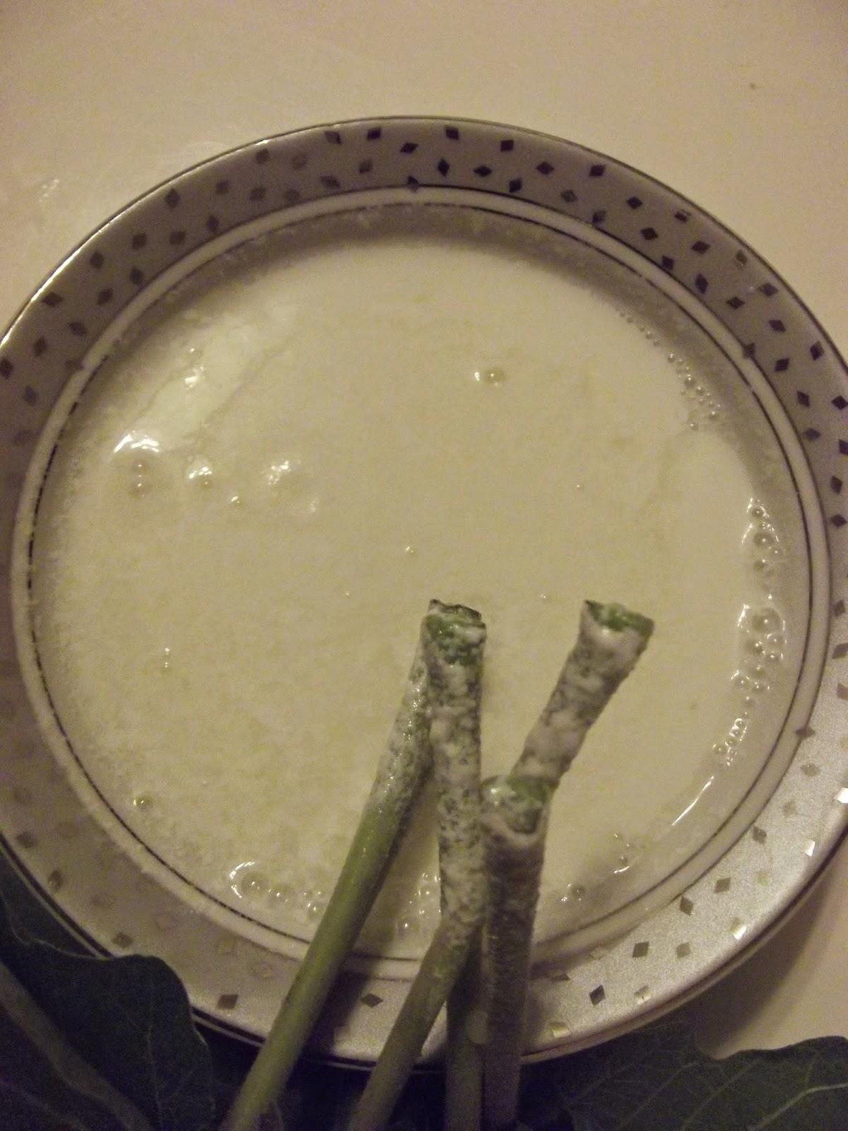 Keçi Sütü Nasıl Mayalanır