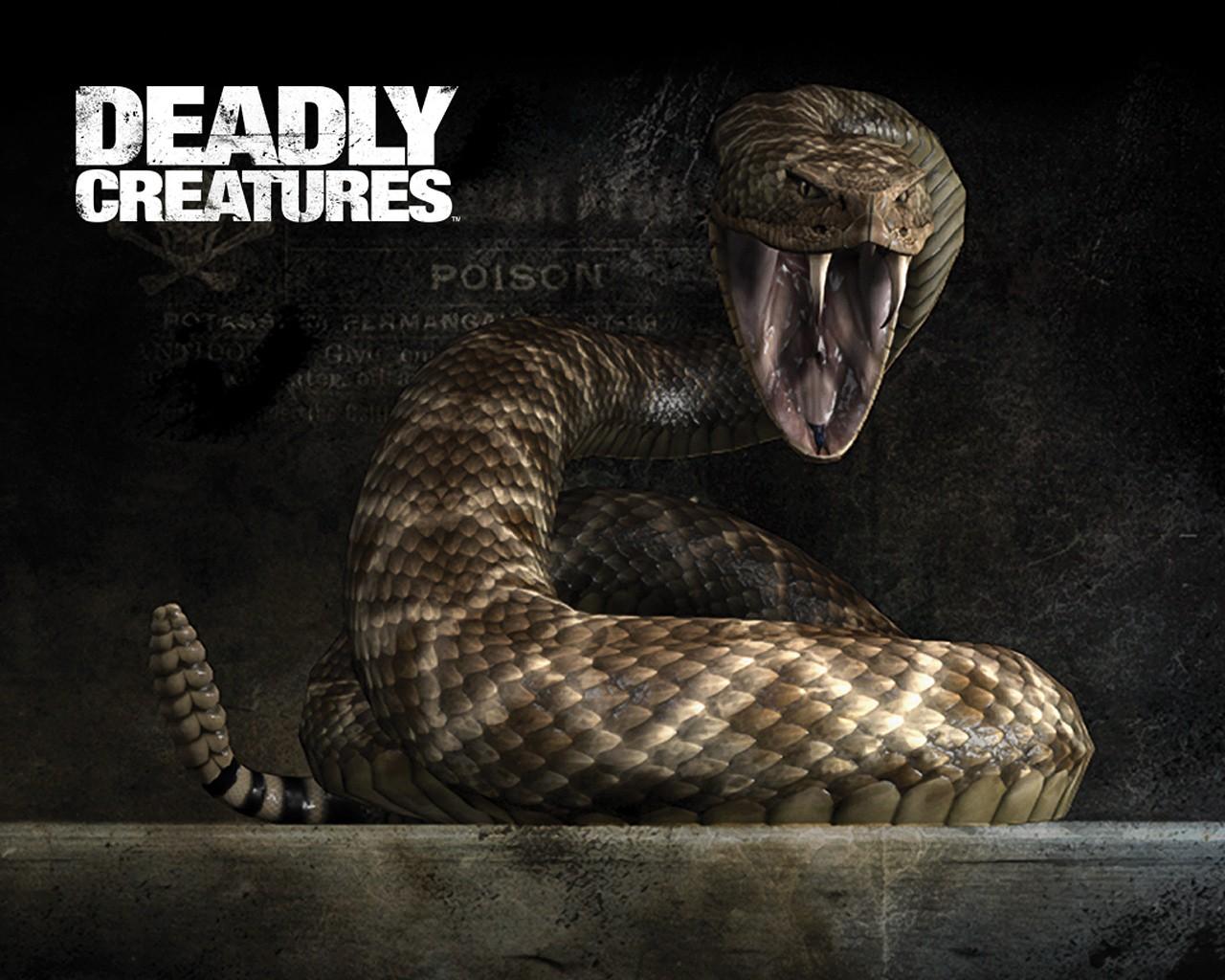 Hd Wallpaper Of Black Snake: Top 26 Snake Wallpapers In HD