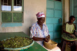 Shelling pigeon peas in Kenya Africa