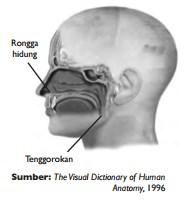 Rongga Hidung dan Tenggorokan