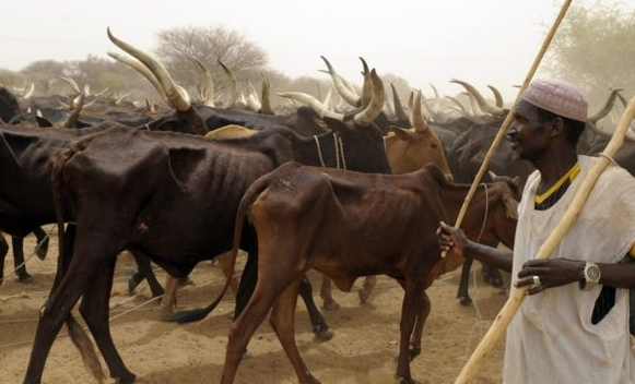 fulani herdsman beheads friend