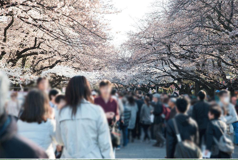 上野公園の桜4