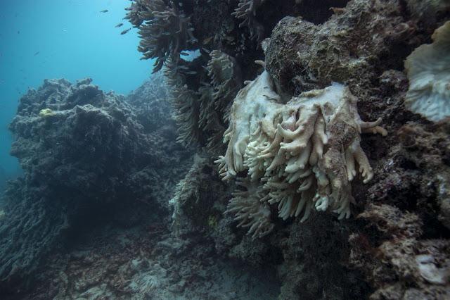 Scientists send coral reef plea to Australia
