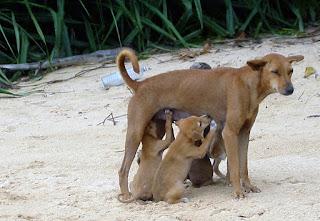 Natural Selection Dog Food Gravesend
