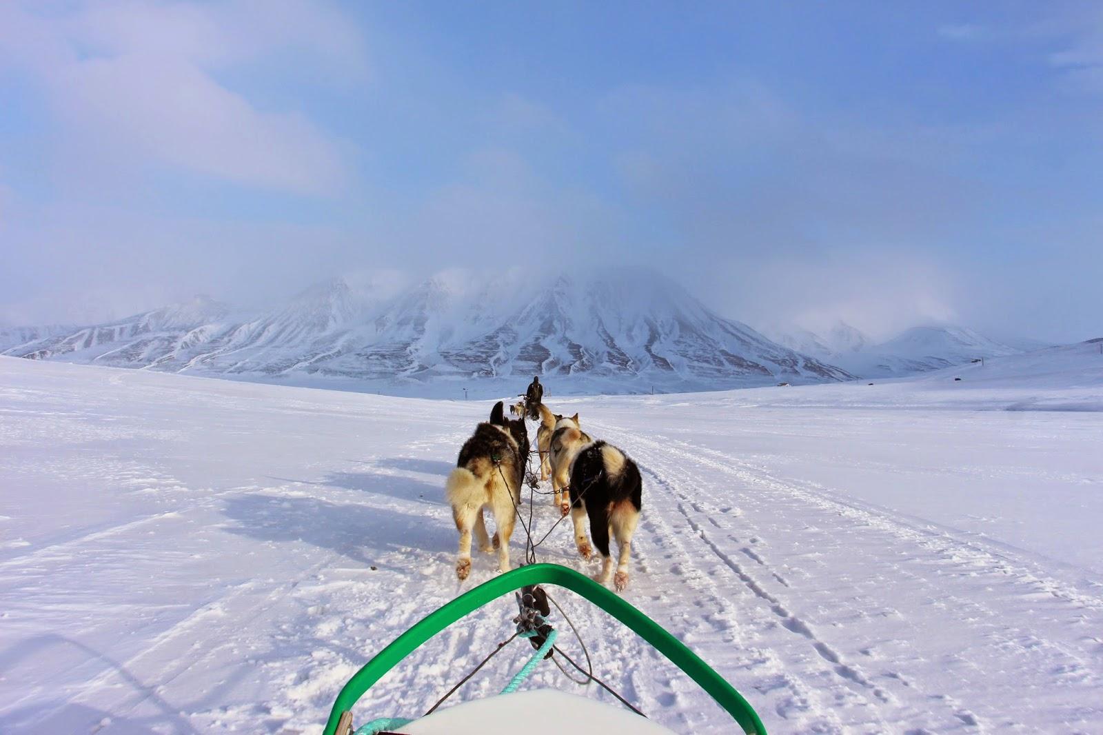 O apelo do Árctico - Correndo em TRENÓ DE CÃES em Svalbard | Noruega