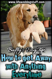 How to Get Away With Anything Every Time - Buffy's dog tips