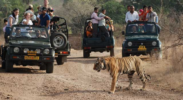 Jim Corbett Wildlife Safari Must Go With Friends