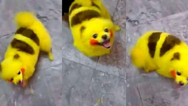 Un fan de Pokémon pinta a su perro como a Pikachu